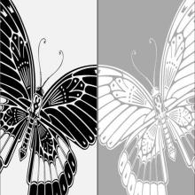 Бабочки,насекомые