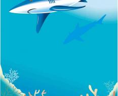 акула2