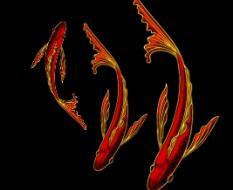 золотые рыбки2
