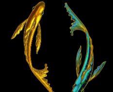 золотые рыбки8