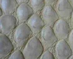 038 Питон слоновая кость матовый