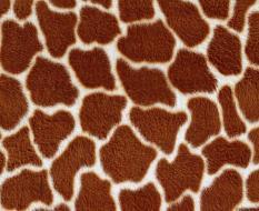 animal_patterns_100