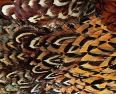 animal_patterns_3