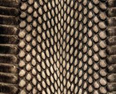animal_patterns_36