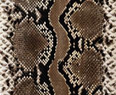 animal_patterns_37