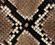 animal_patterns_38