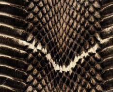 animal_patterns_39