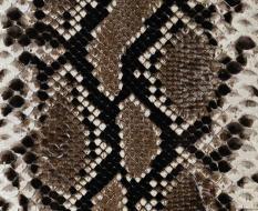 animal_patterns_40