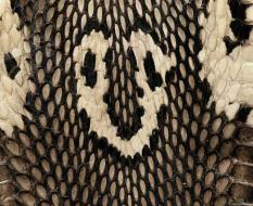 animal_patterns_41