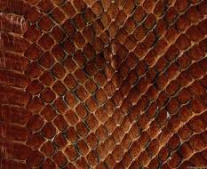 animal_patterns_42