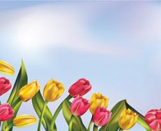 sky_tulip_background
