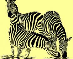 zebra_V9
